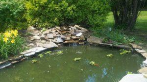 Koi Pond Service TriCities TN Johnson City Jonesborough Kingsport Gray Greeneville