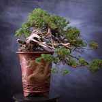 Tree The People - Bonsai by Daniel Coffey